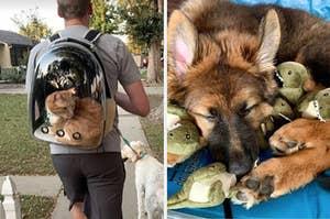 猫背包和狗玩具