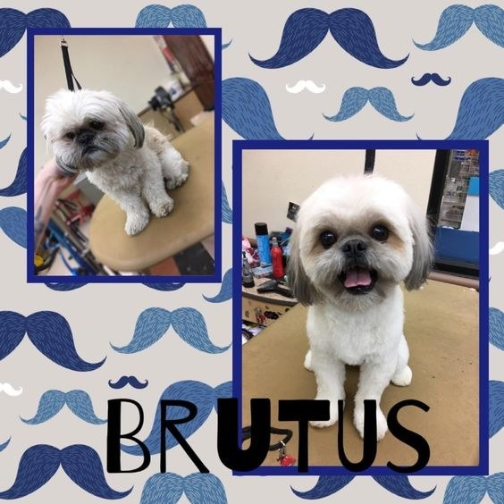 reviewer's before and after of their groomed dog