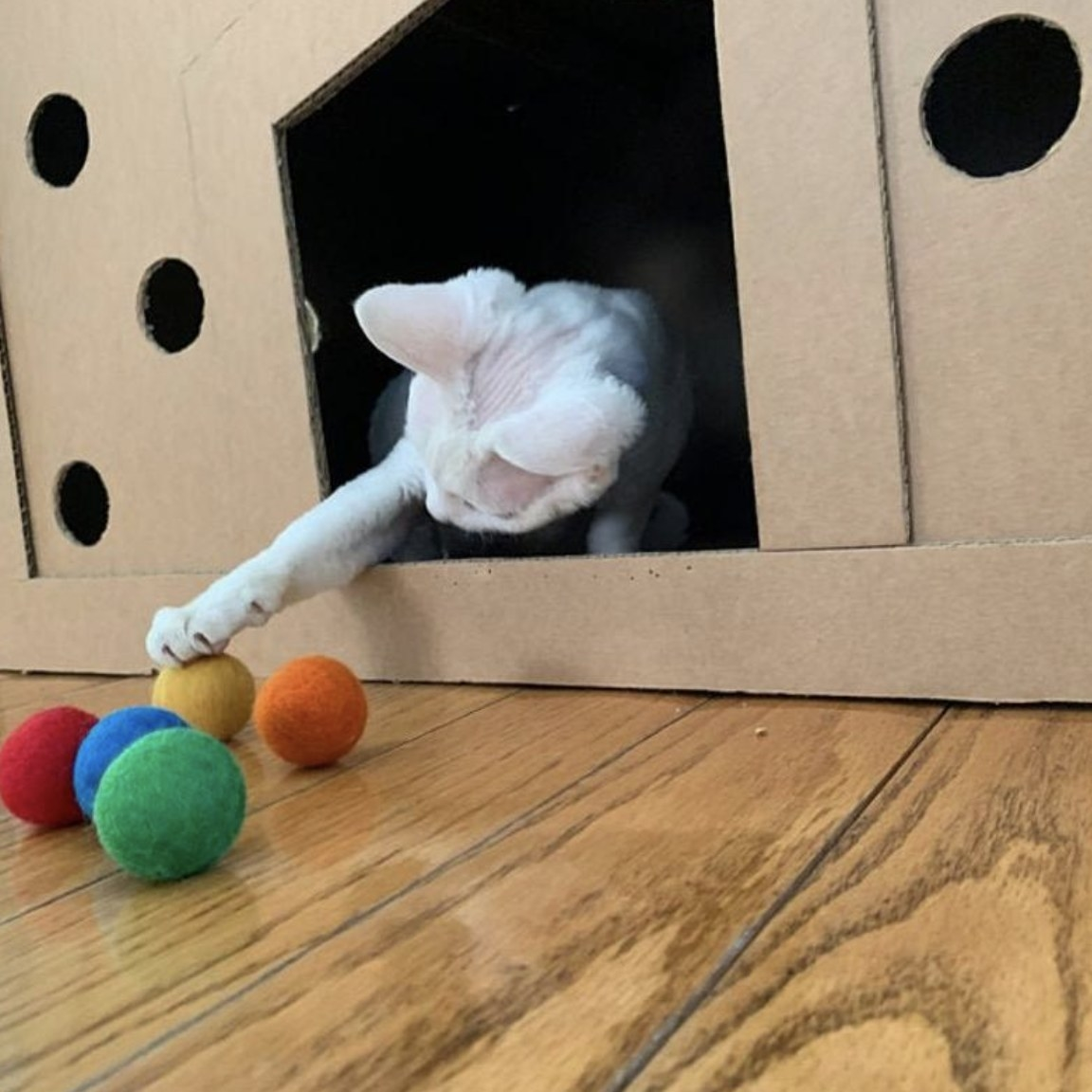 A cat playing with felt balls