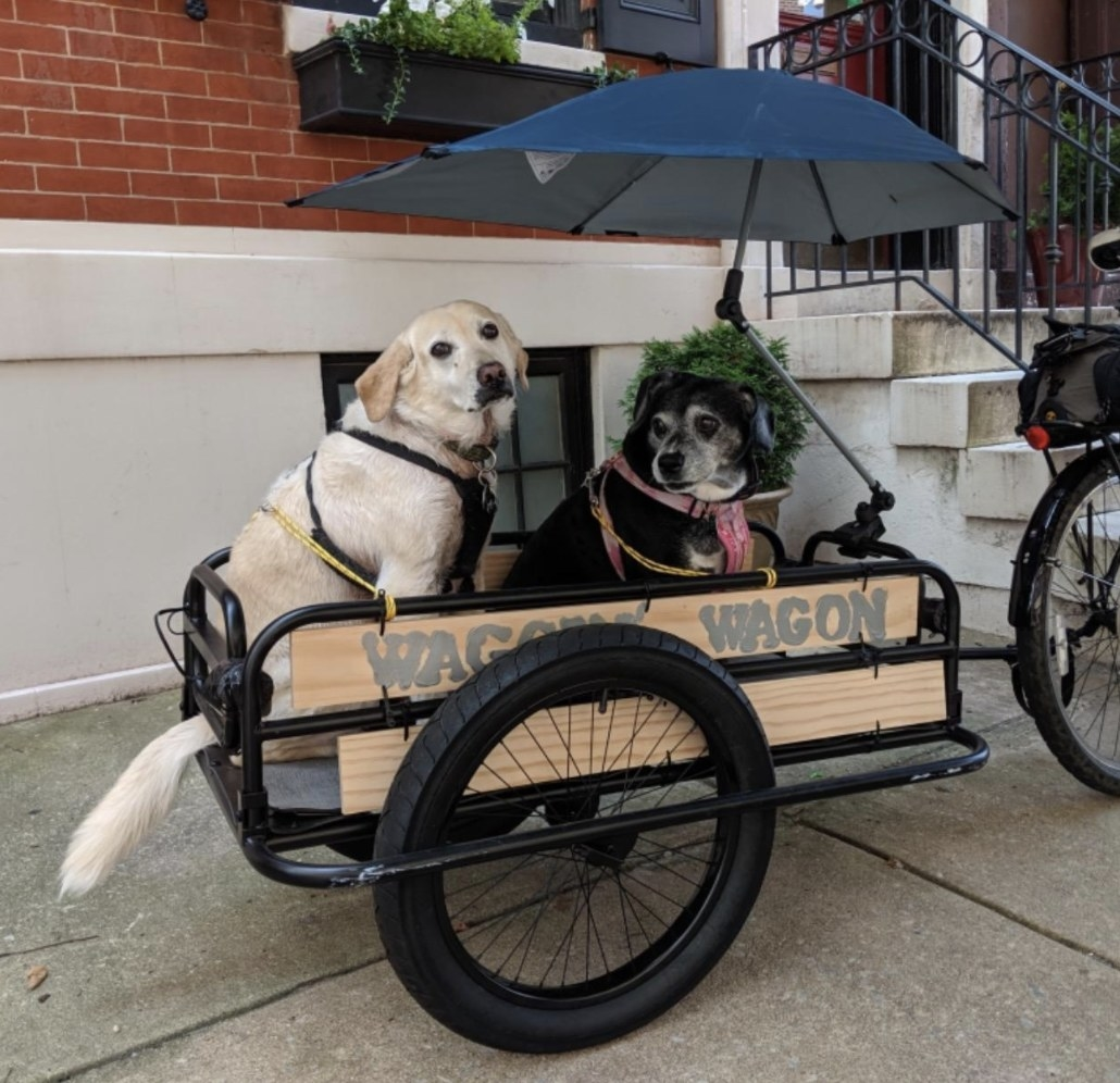 Two dogs in a wagon