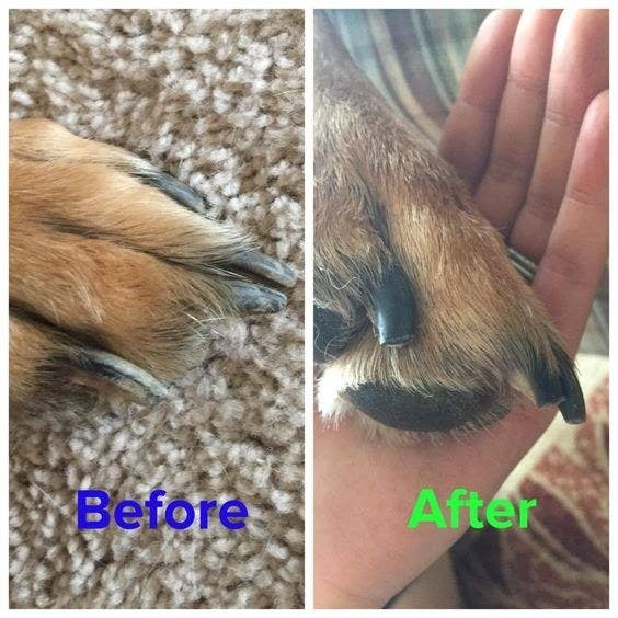 reviewer's before picture of their dog's long nails and after of short nails