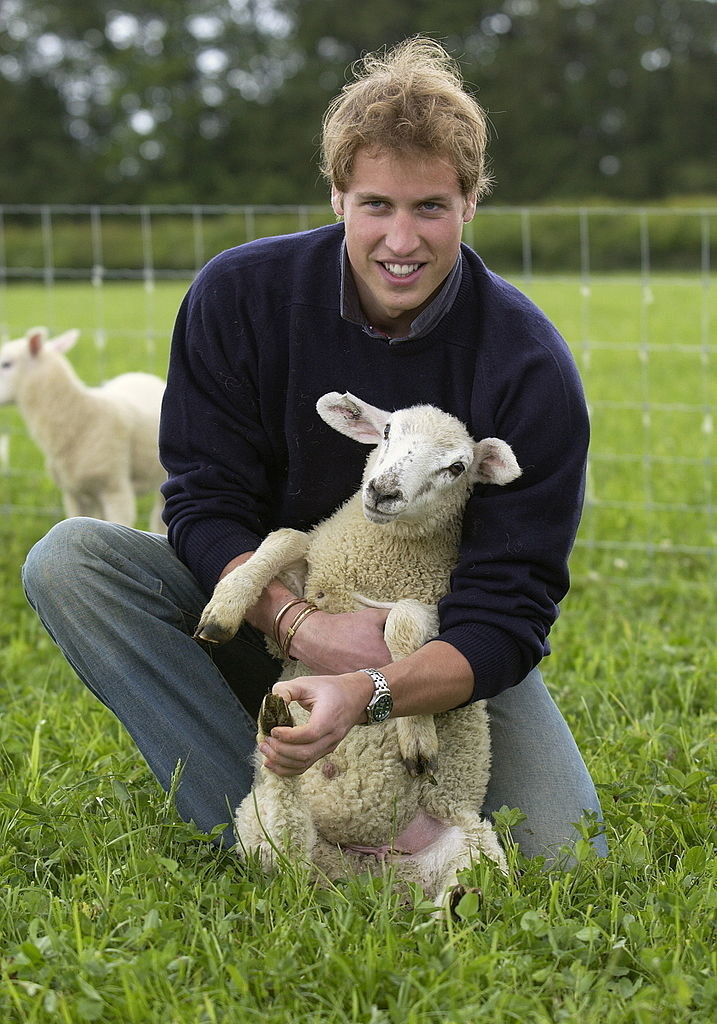 with a lamb