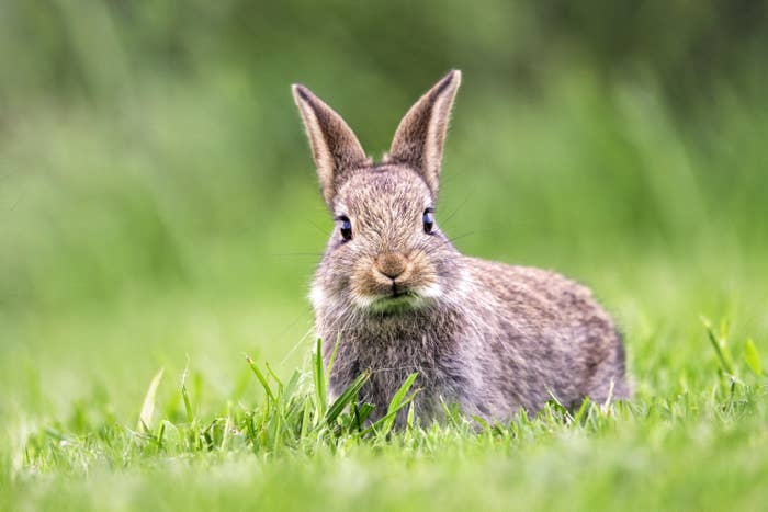 Bunny in the grass