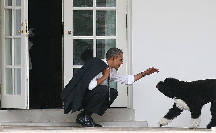 Barack Obama kneels to pet his dog Bo