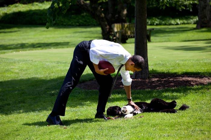 President Obama giving Bo belly rubs