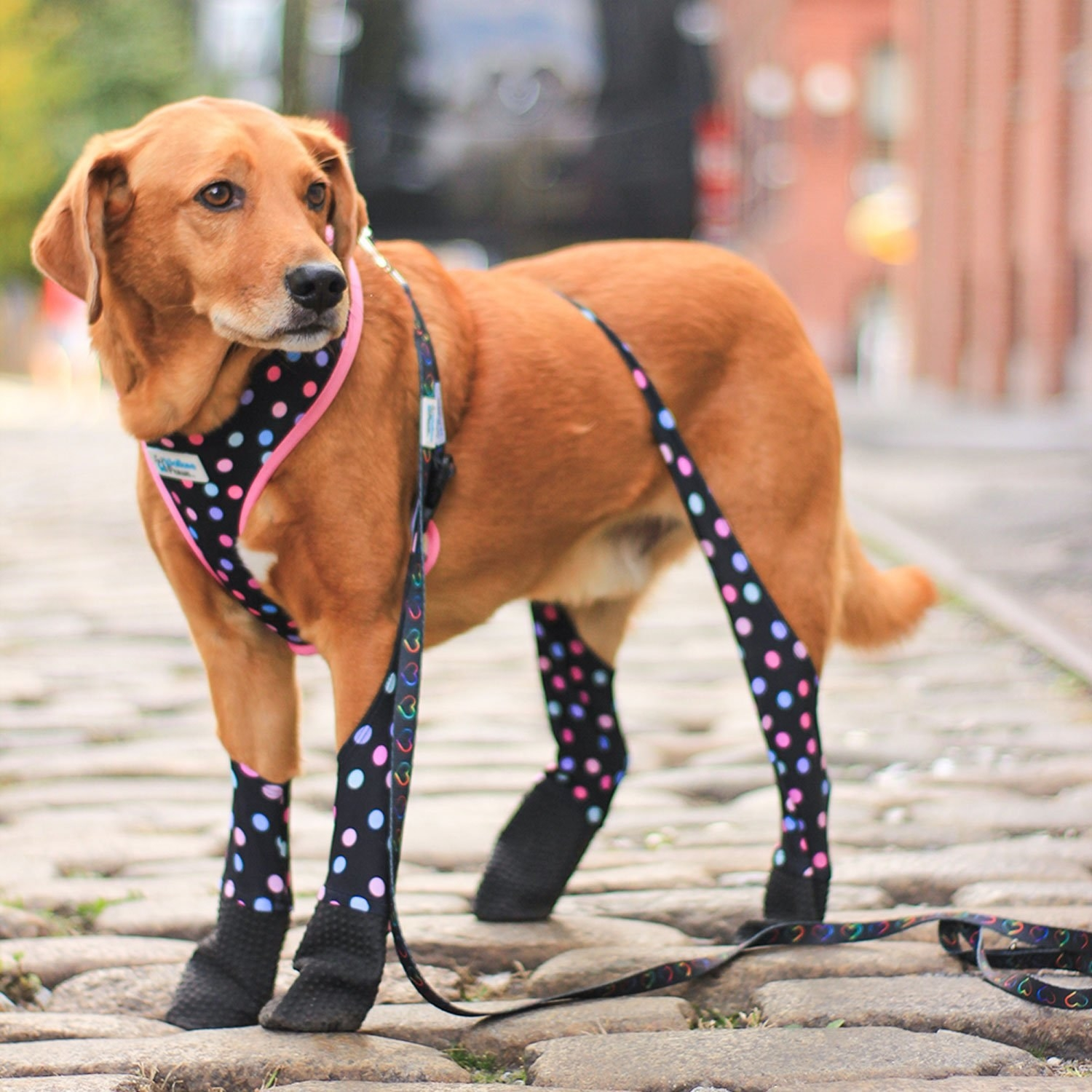 a dog wearing the confetti-patterned dog leggings on cobblestone pavement