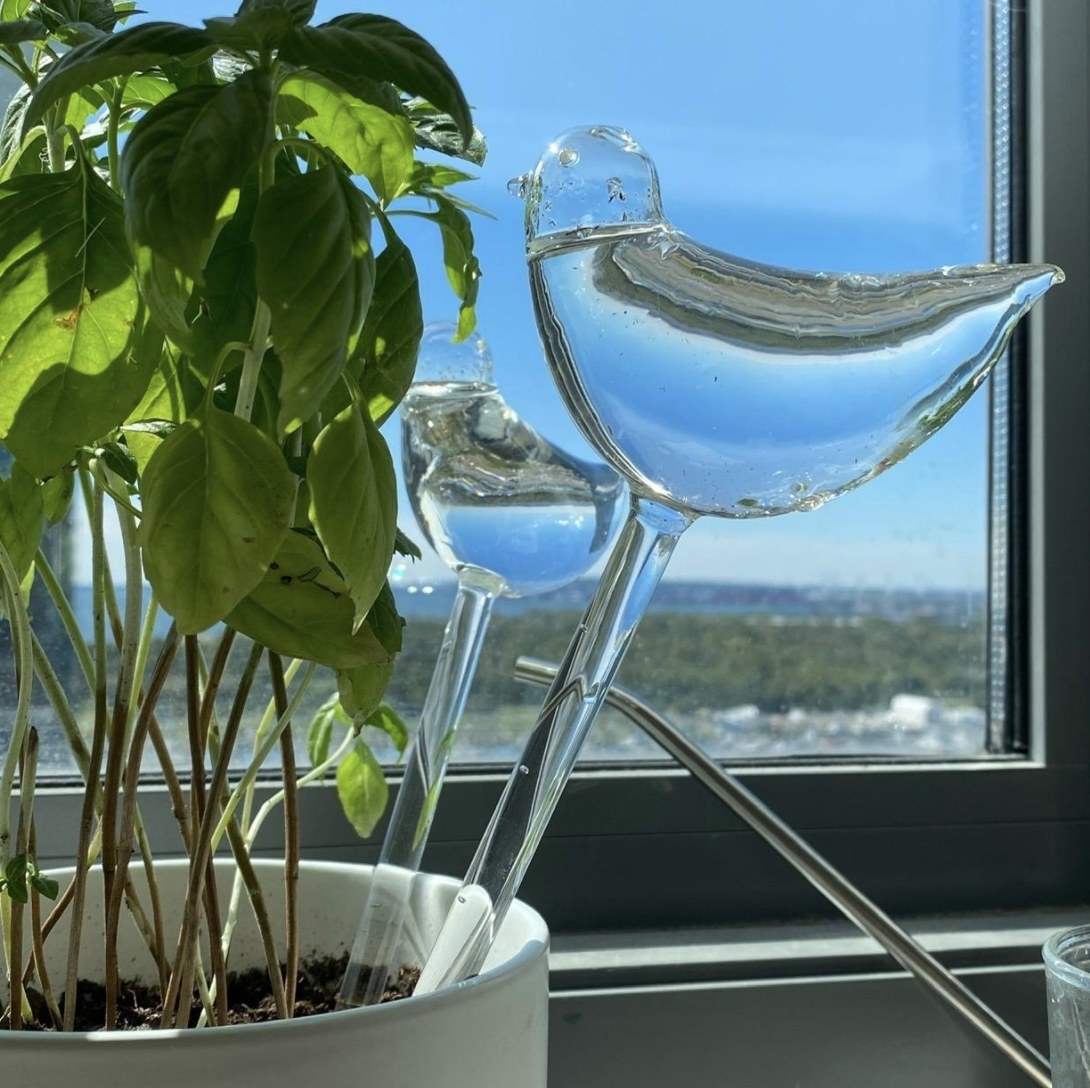 The watering glass