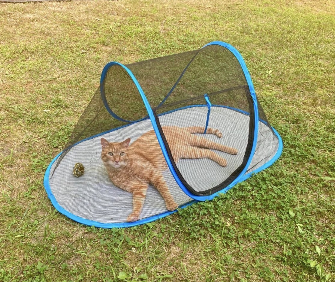 A cat lounging in a tent