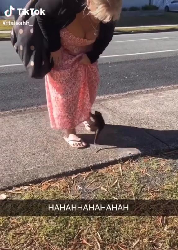 A possum jumping onto a woman's skirt