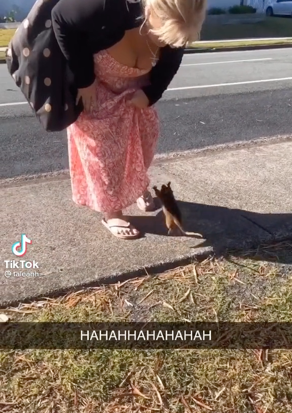 A woman leaning down towards a possum; the possum is mid-jump and heading towards the woman's skirt