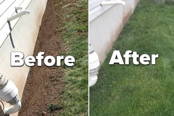 A patchy lawn before using the product / A full lawn after using the product