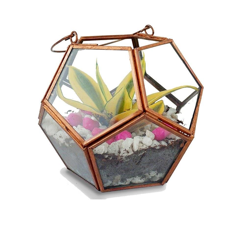 A hexagonal glass holder with golden edges. It's housing a terrarium.