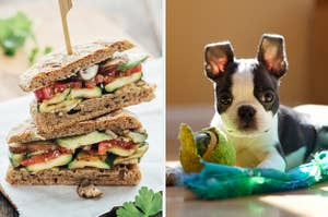 On the left, a veggie sandwich cut in half and stacked, and on the right, a Boston terrier puppy sitting on the floor next to a shredded tennis ball
