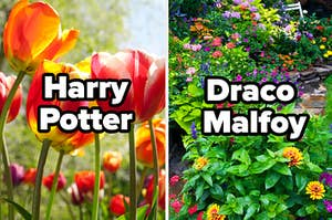 """Two gardens are displayed with one on the left labeled, """"Harry Potter"""" and """"Draco Malfoy"""" on the right"""