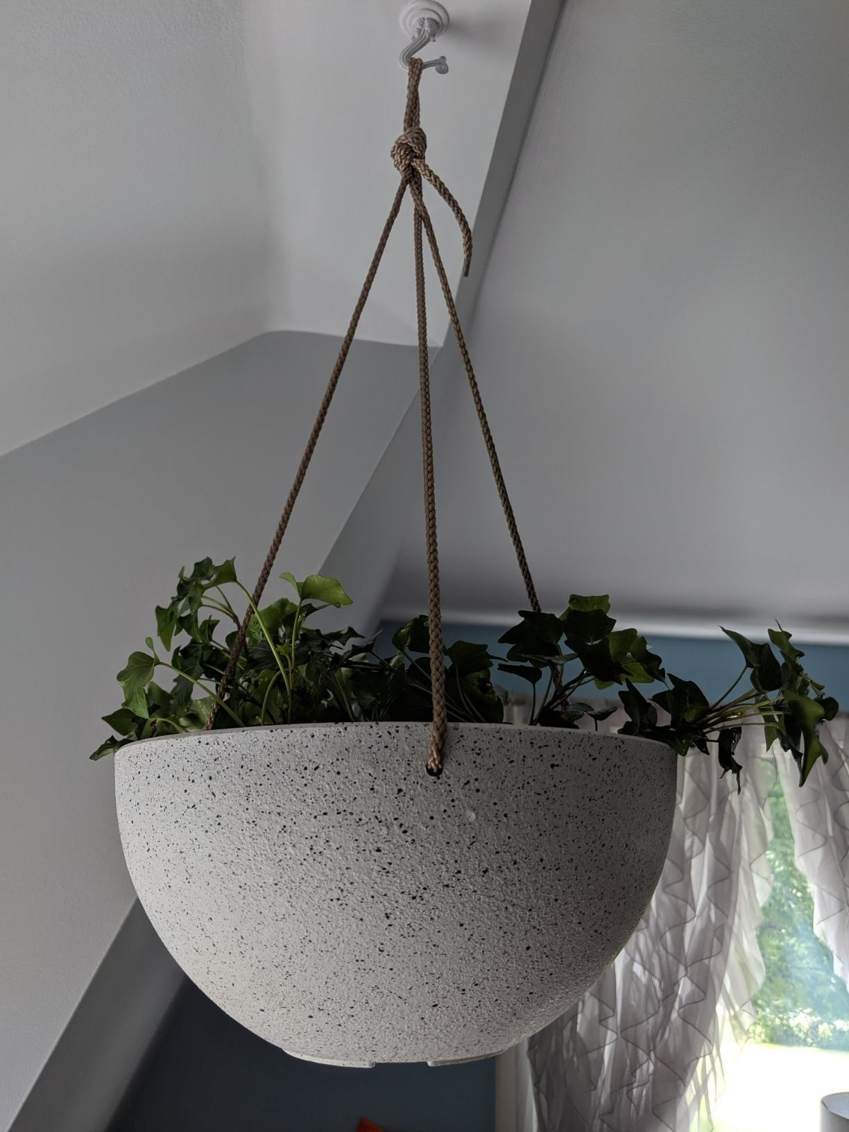 The half sphere planter installed from a ceiling