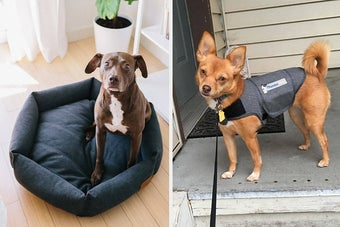 hexagon bed with a dog in it on the left and a dog wearing a thundershirt on the right
