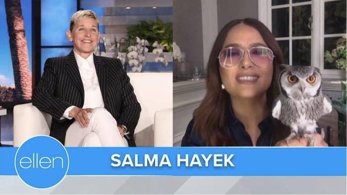 A split image of Ellen Degeneres, Salma Hayek and her pet owl, Kering