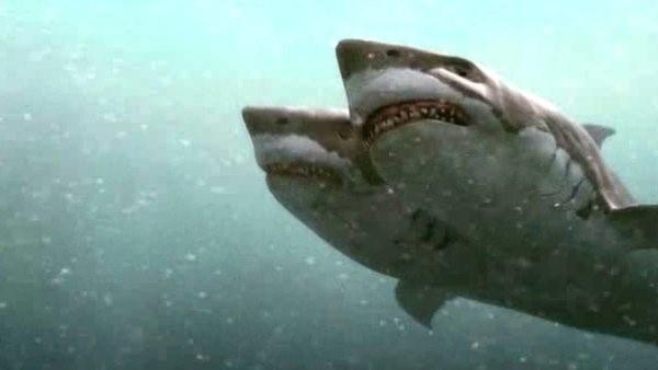 2 headed shark