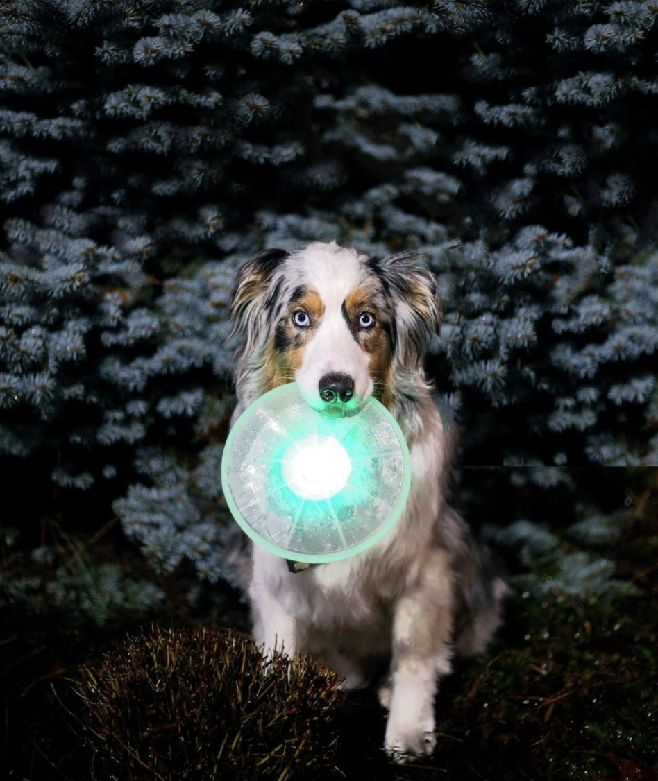 a dog with the disc in it's mouth