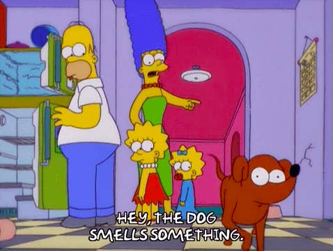 """Marge Simpson pointing at a dog saying, """"Hey, the dog smells something"""""""