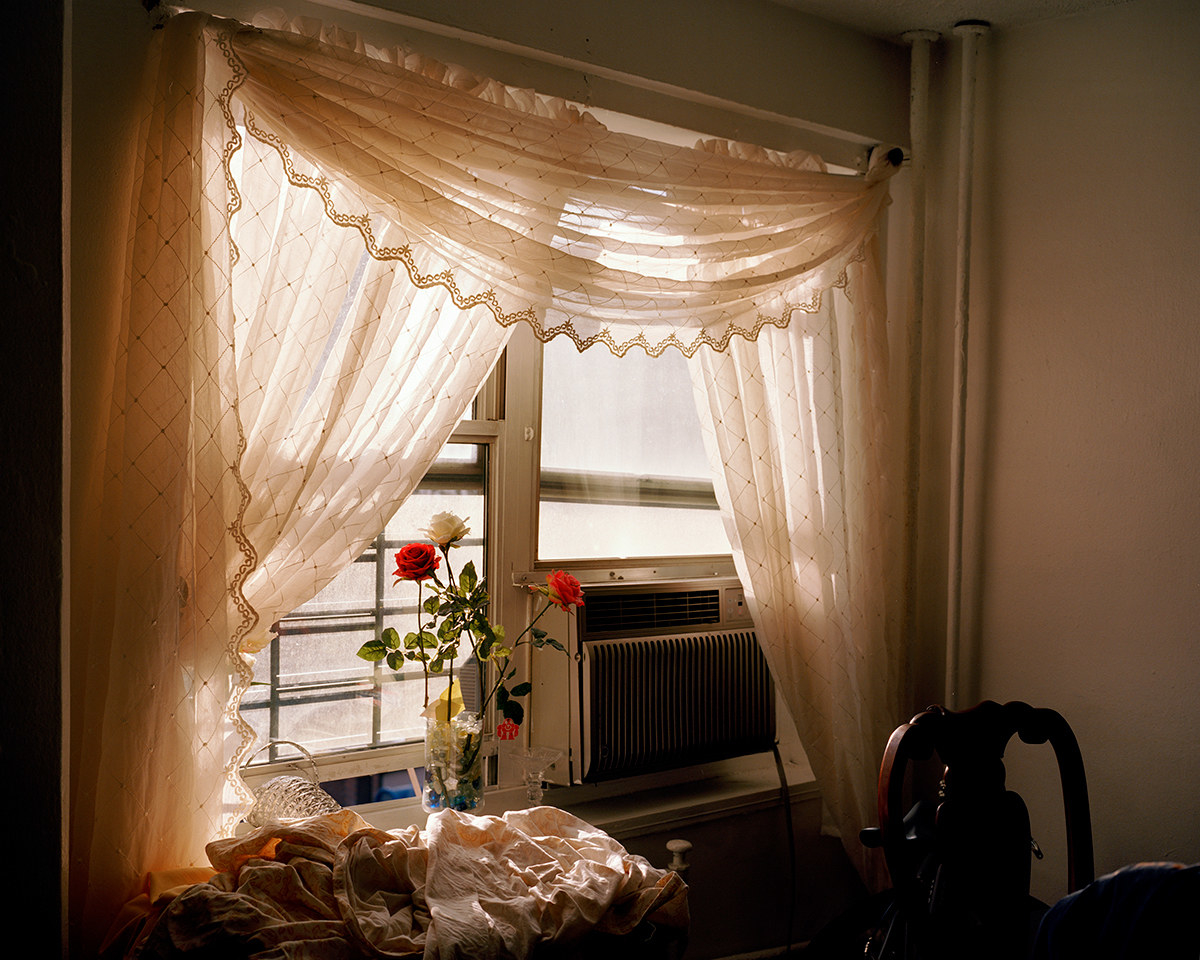 Sunlight through lace curtains on a window with roses and an AC in the foreground
