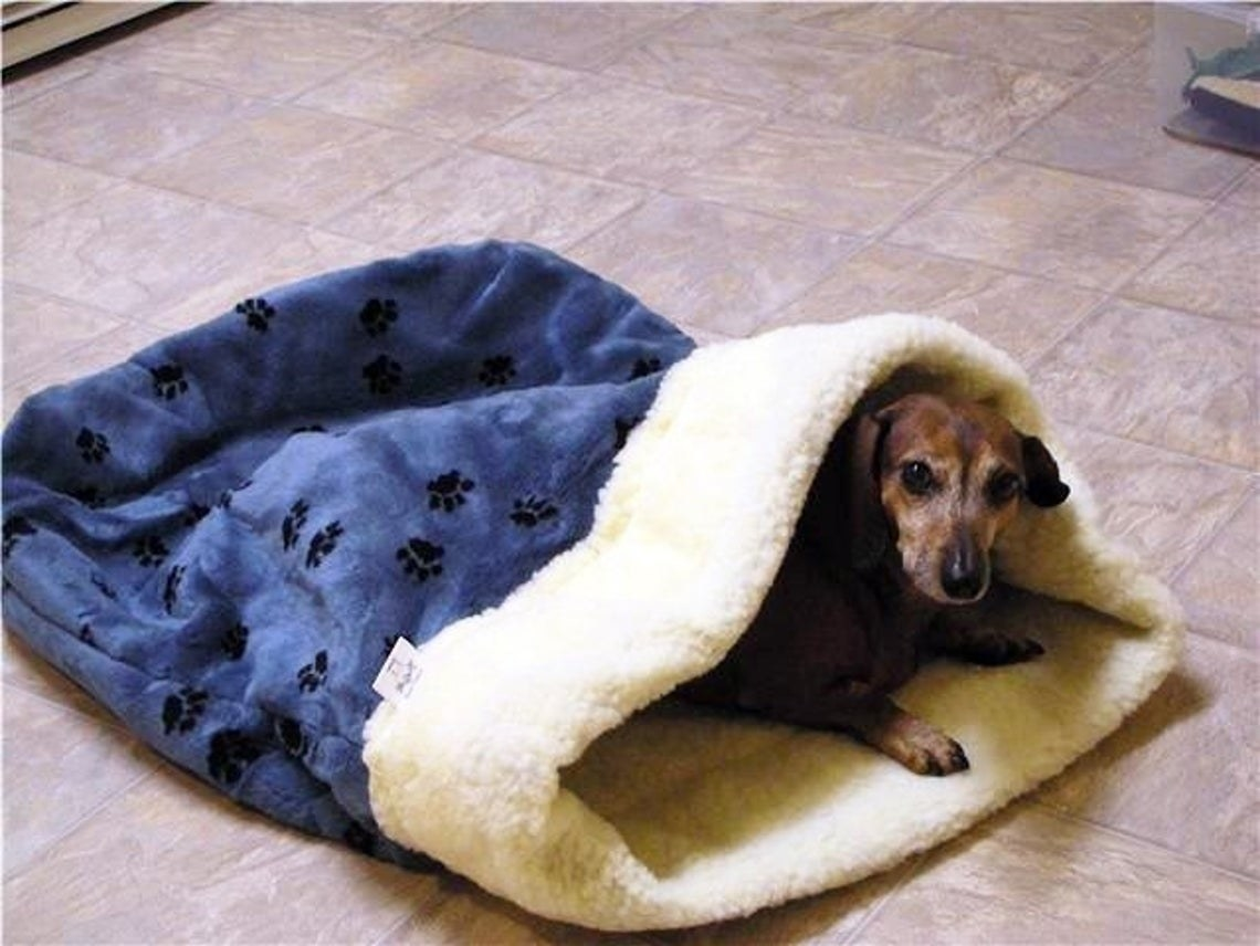A dog nestled up in the sleeping bag