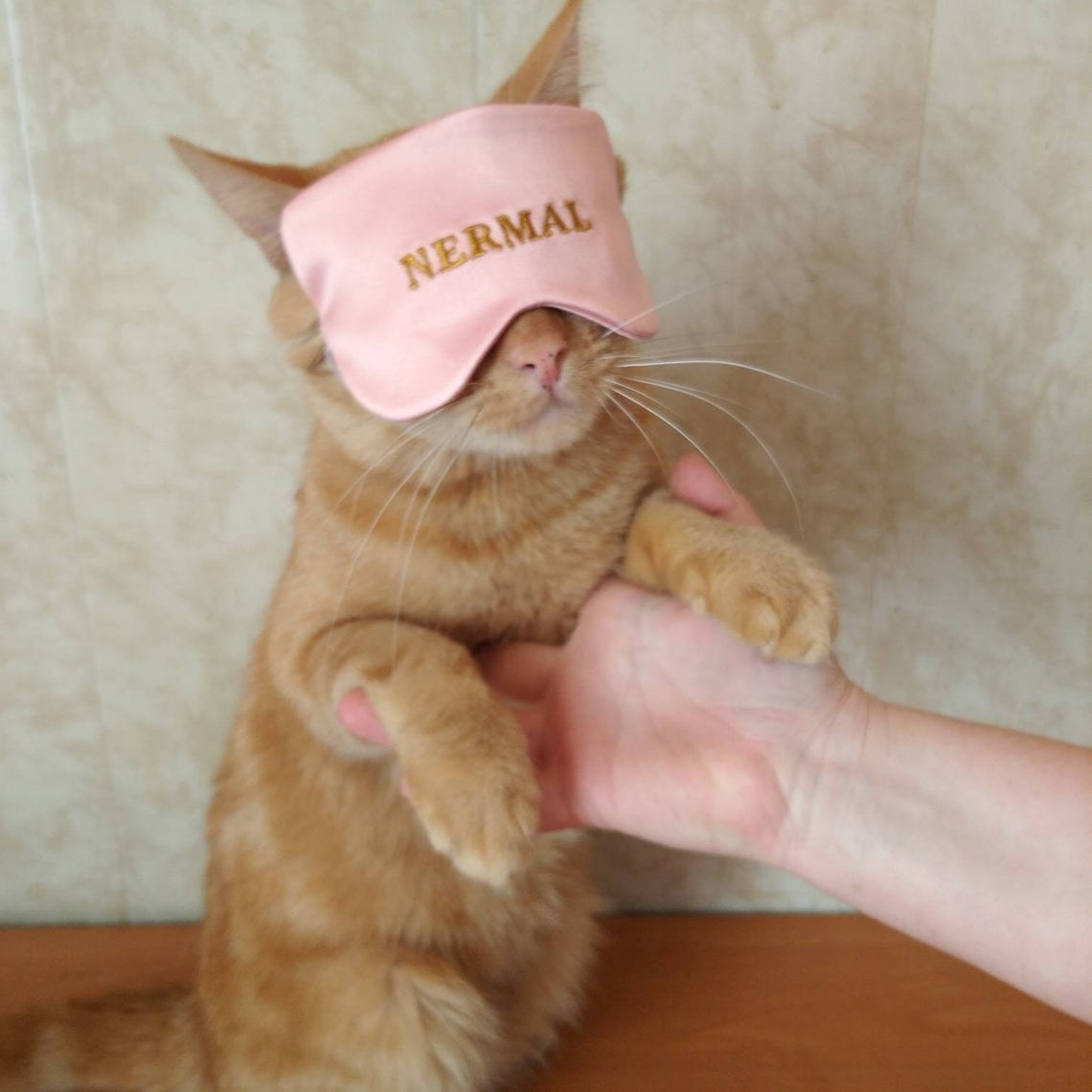 A cat wearing the sleeping mask in pink