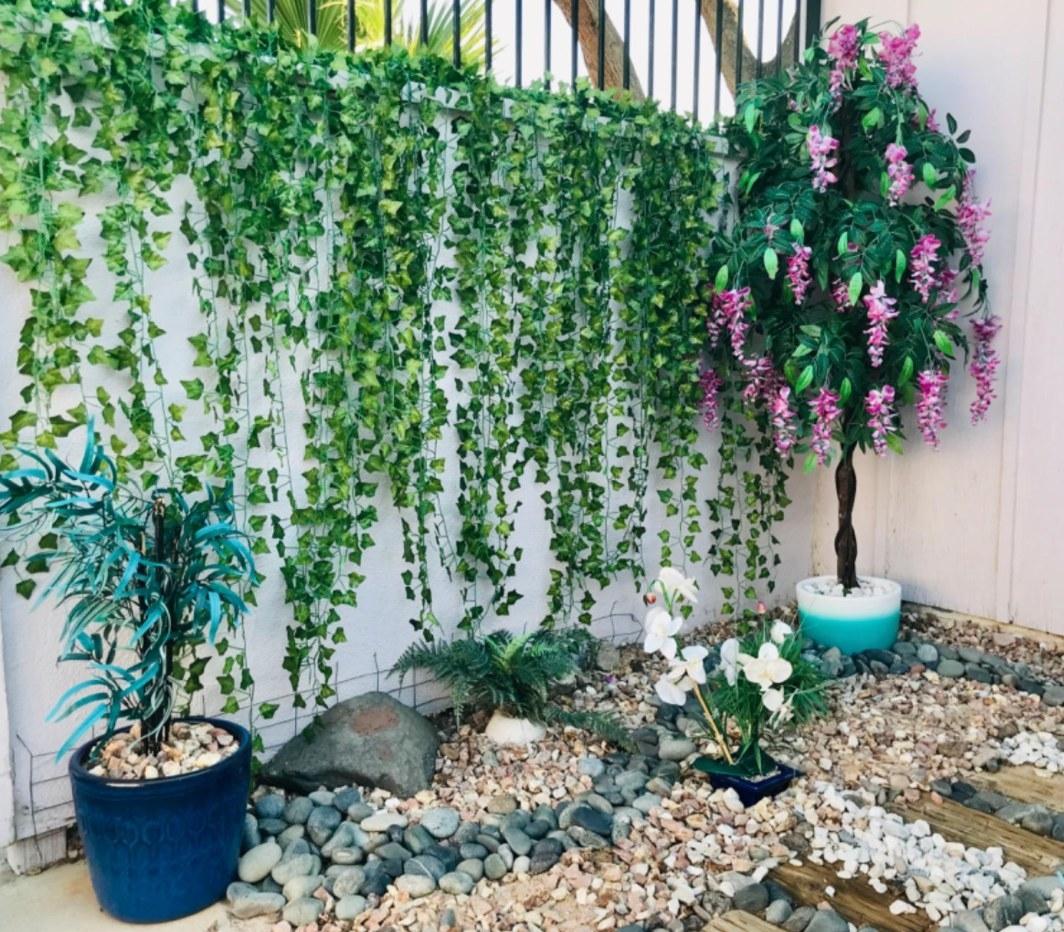 Ivy Hanging in reviewer's Garden