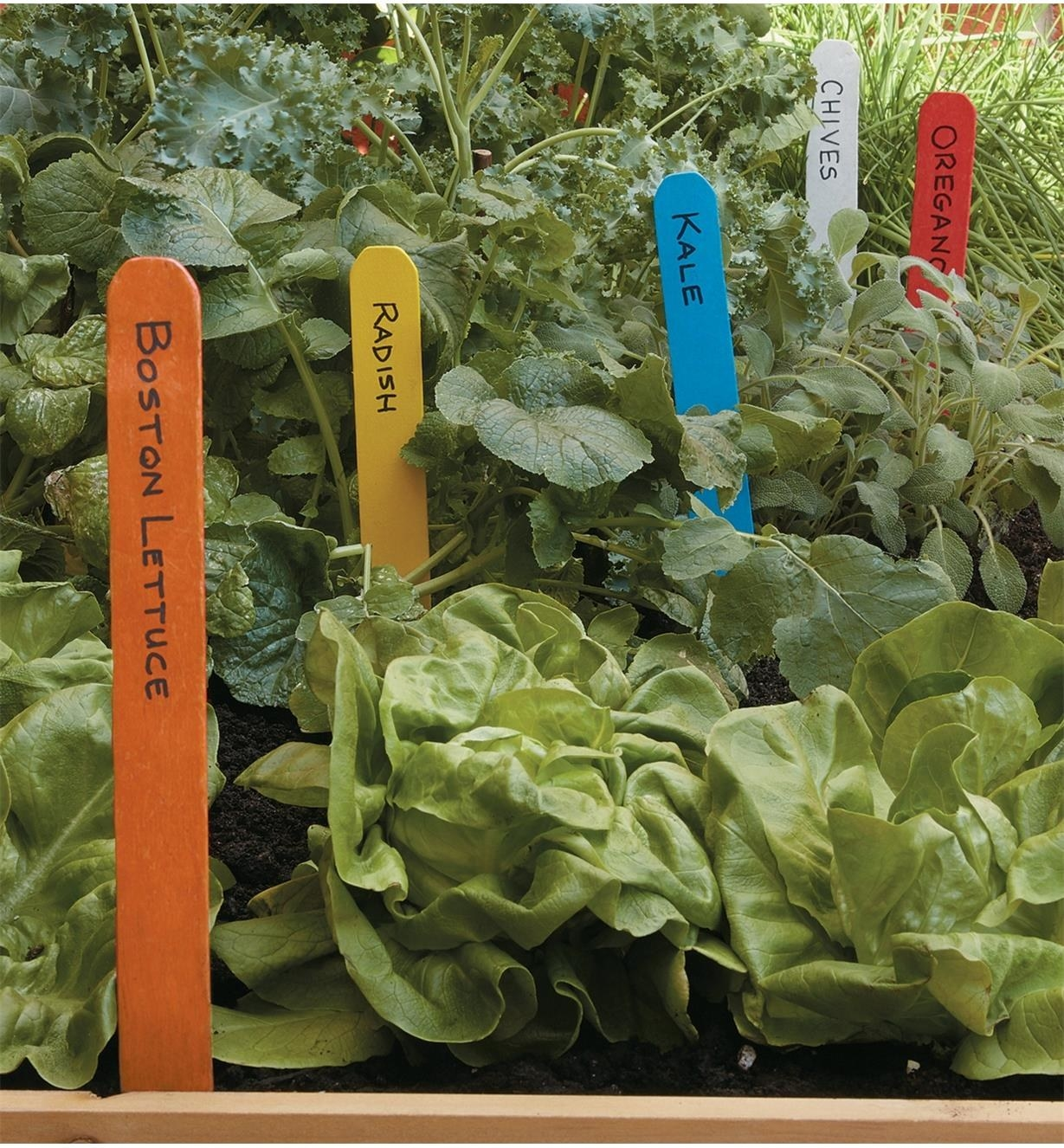 A bunch of small wooden stakes with labels sticking out of a vegetable garden