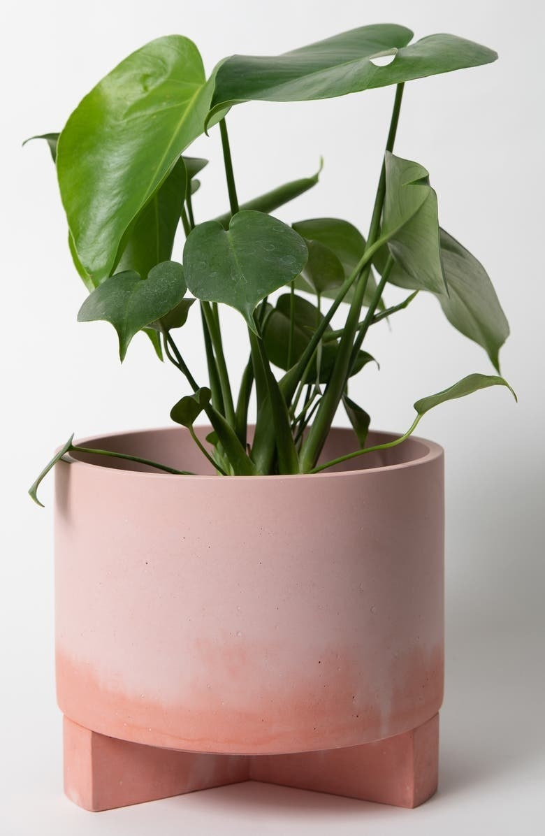 the pink planter