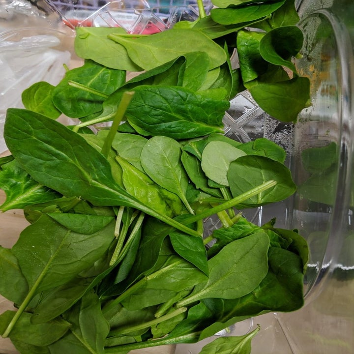 Reviewer's photo of spinach, still fresh, after using the Bluapple