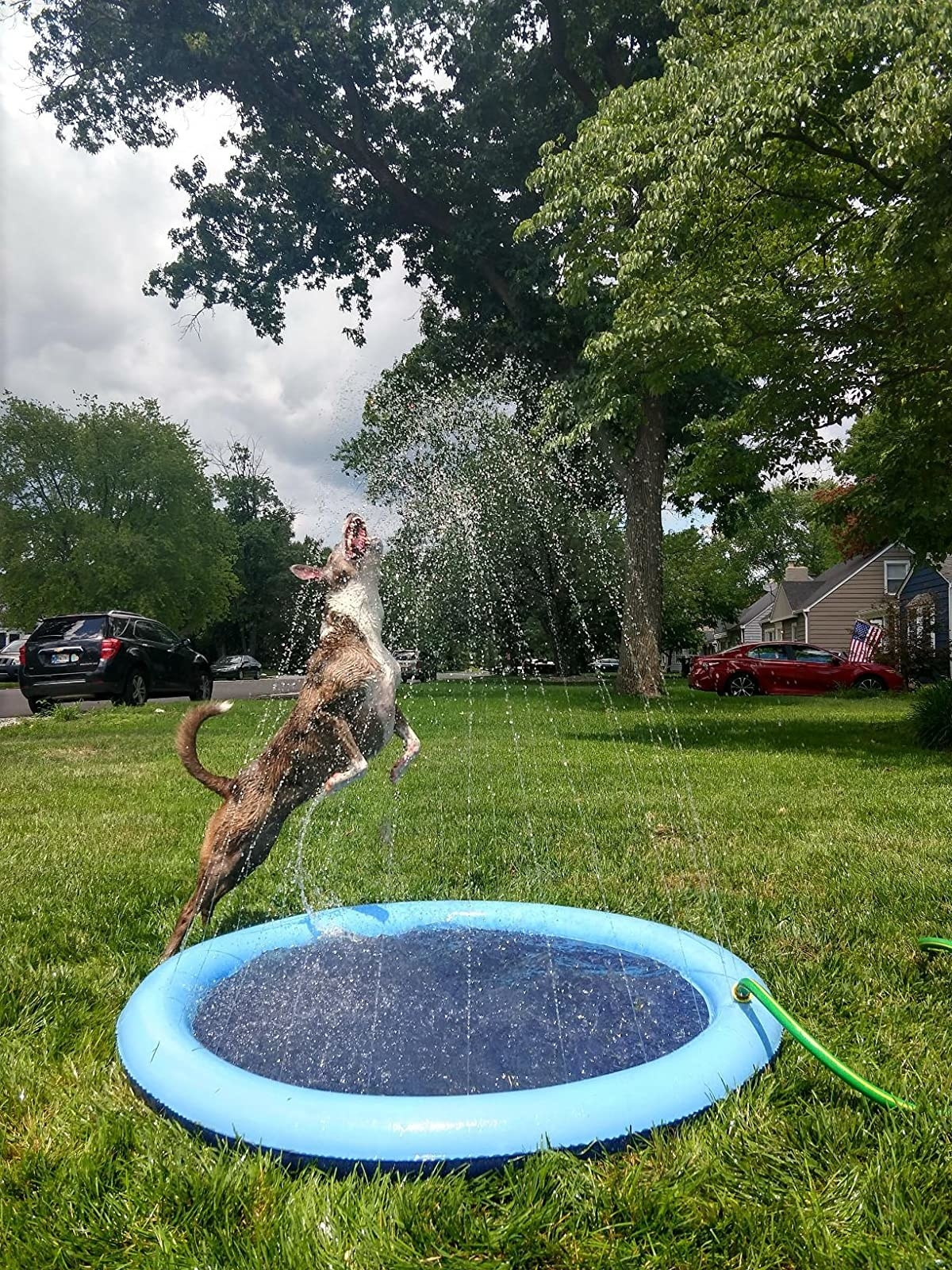 reviewer image of a dog jumping into the water sprayed by the sprinkler pad