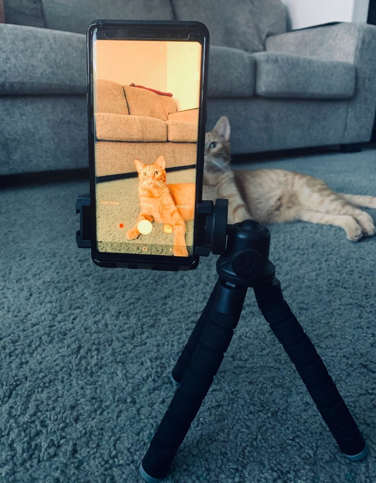 Reviewer photo of the tripod holding an phone pointed at a cat