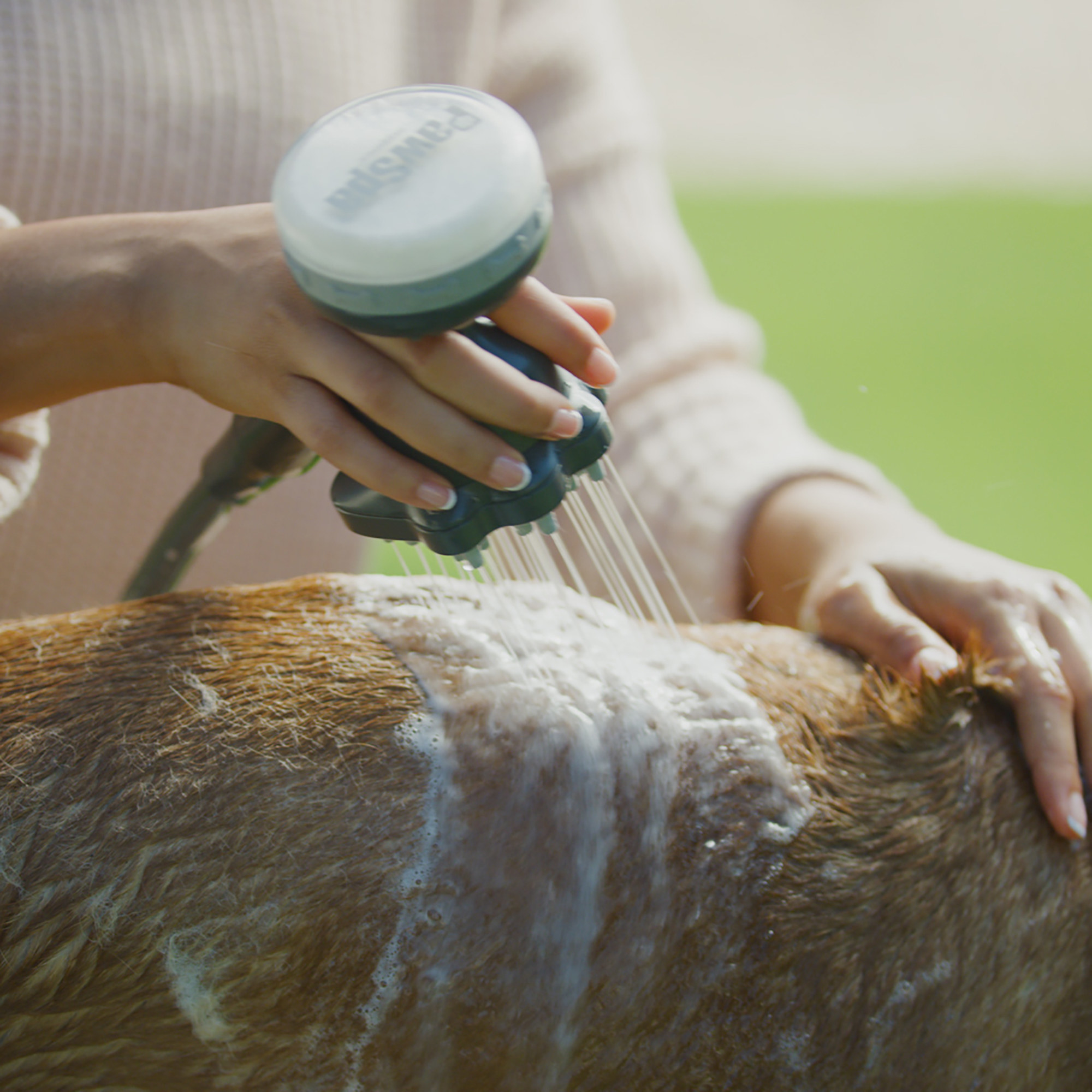 A model washes a dog with the shampoo on