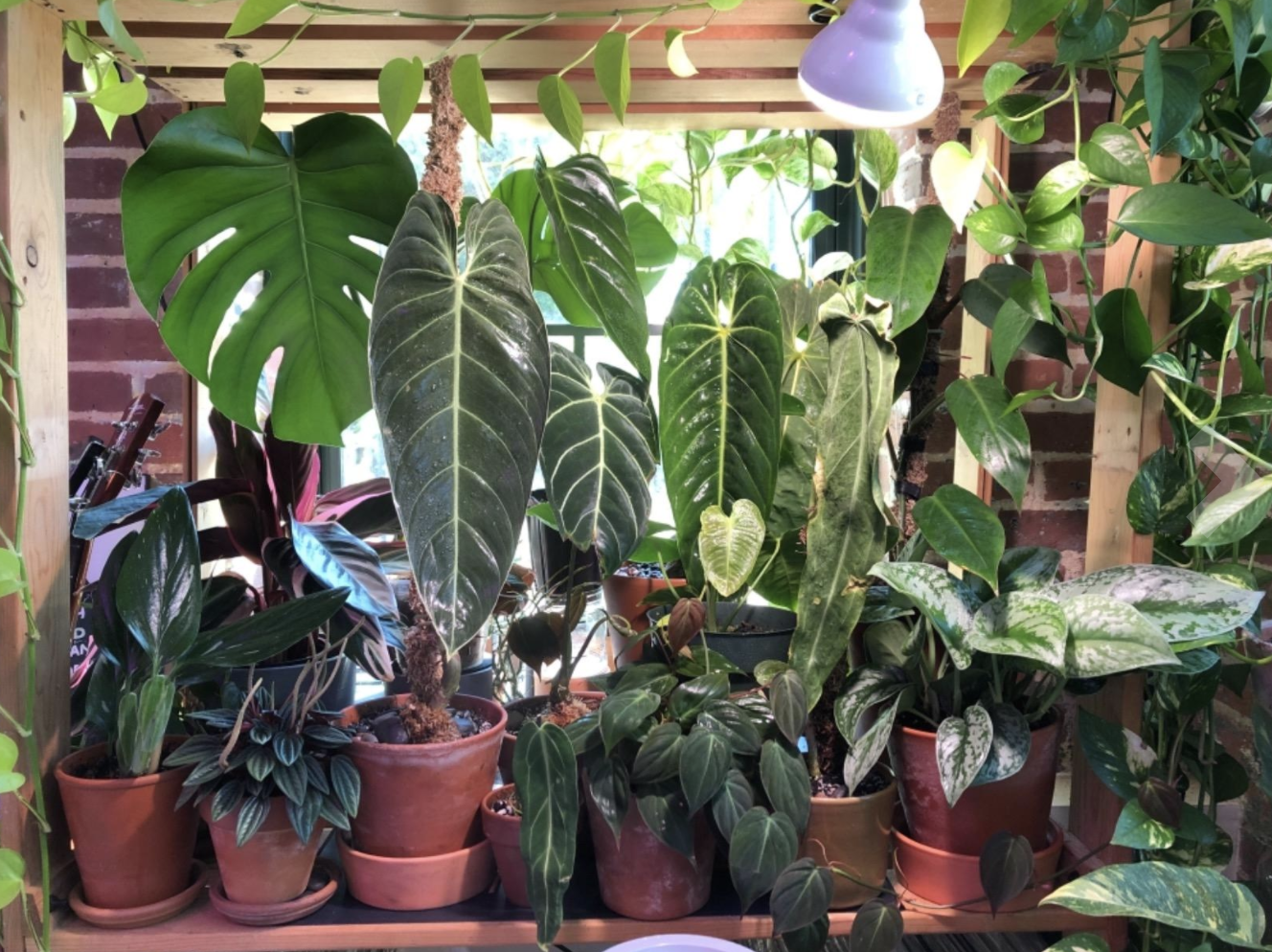 A reviewer's plants under the grow lights