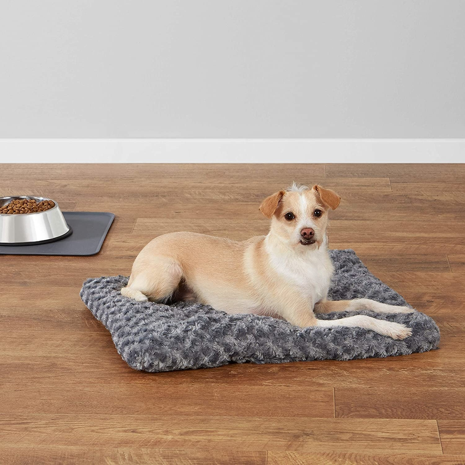 Small tan and white dog lying on a gray rectangular dog bed