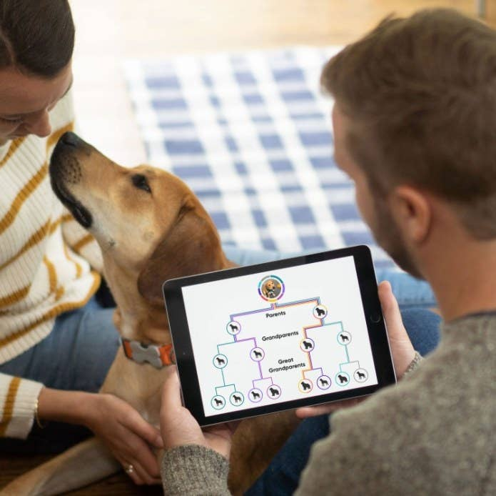 An image of a couple using an Embark dog DNA test