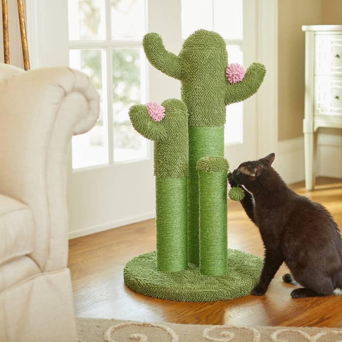 An image of a cat playing with a cactus cat scratching post
