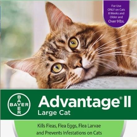 A flea spot treatment for cats