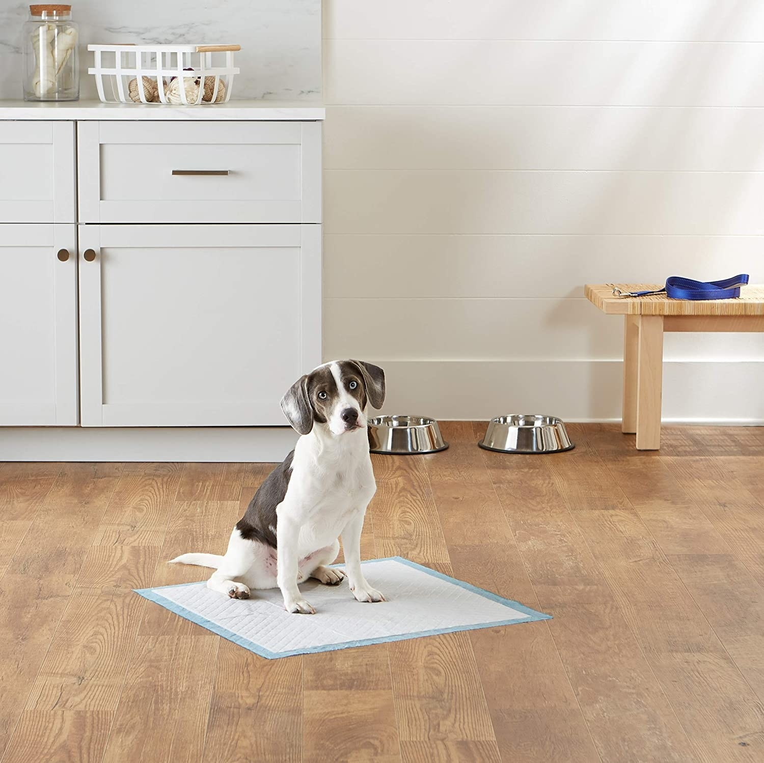 Dog sitting on puppy pad placed on floor
