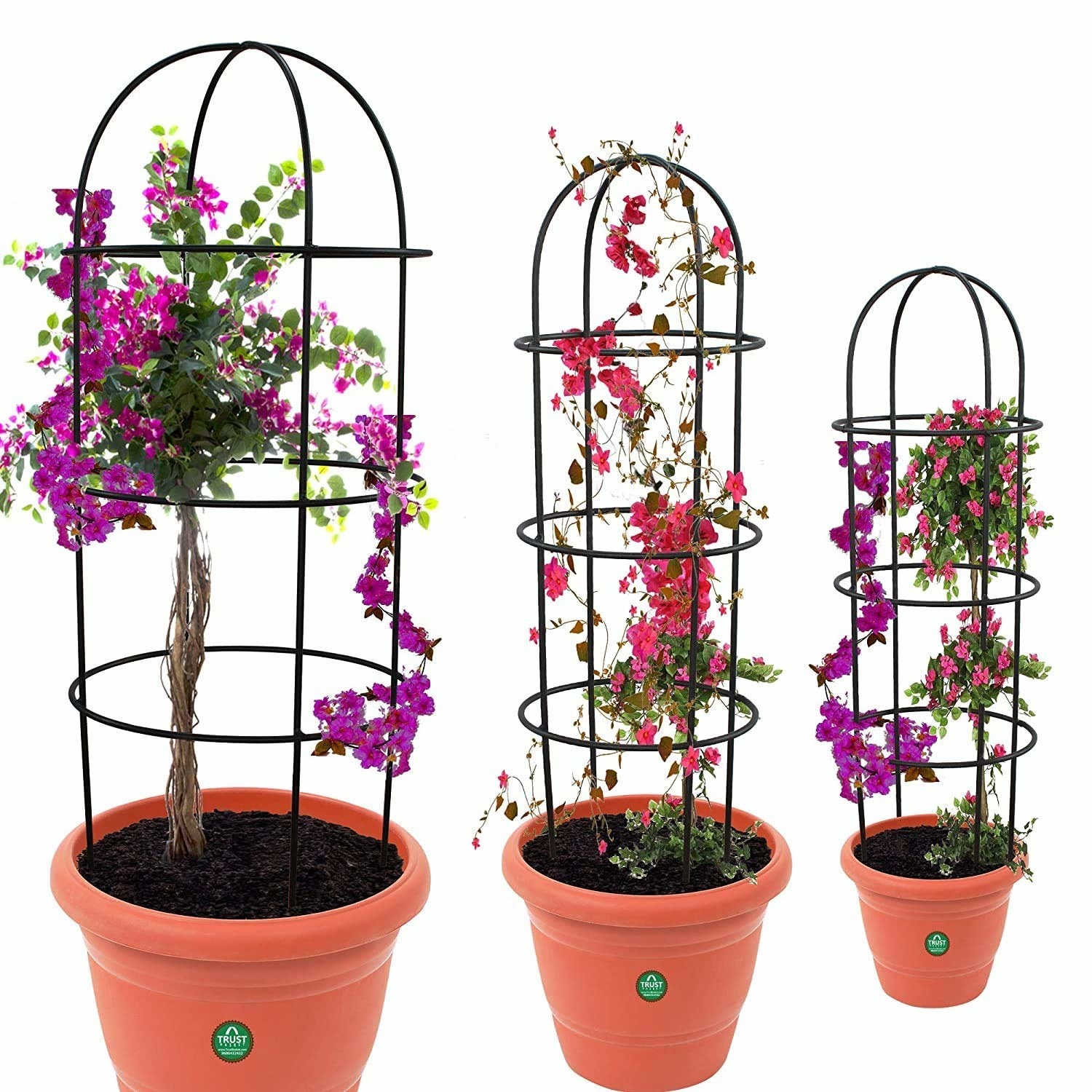 3 potted plants with an obelisk trellis attached for plant support.