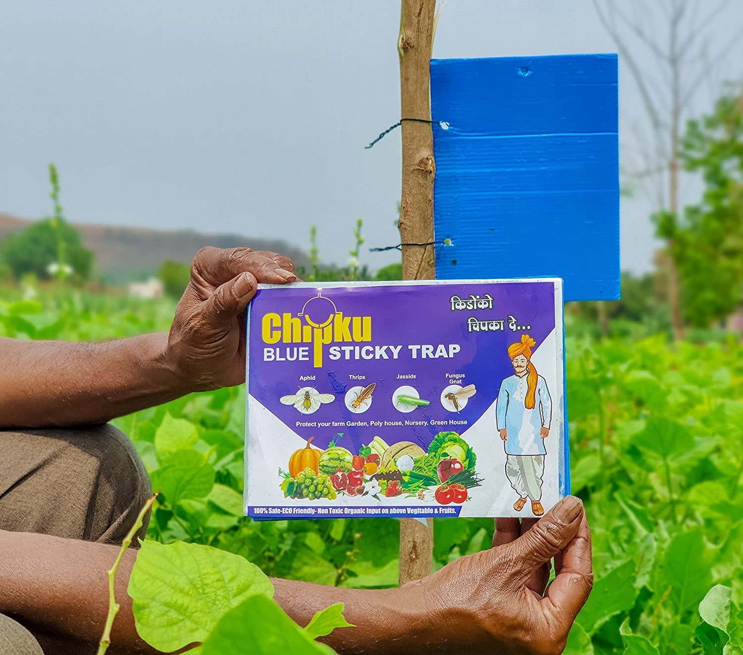 A man holding up a pack of sticky blue insect traps in a field.
