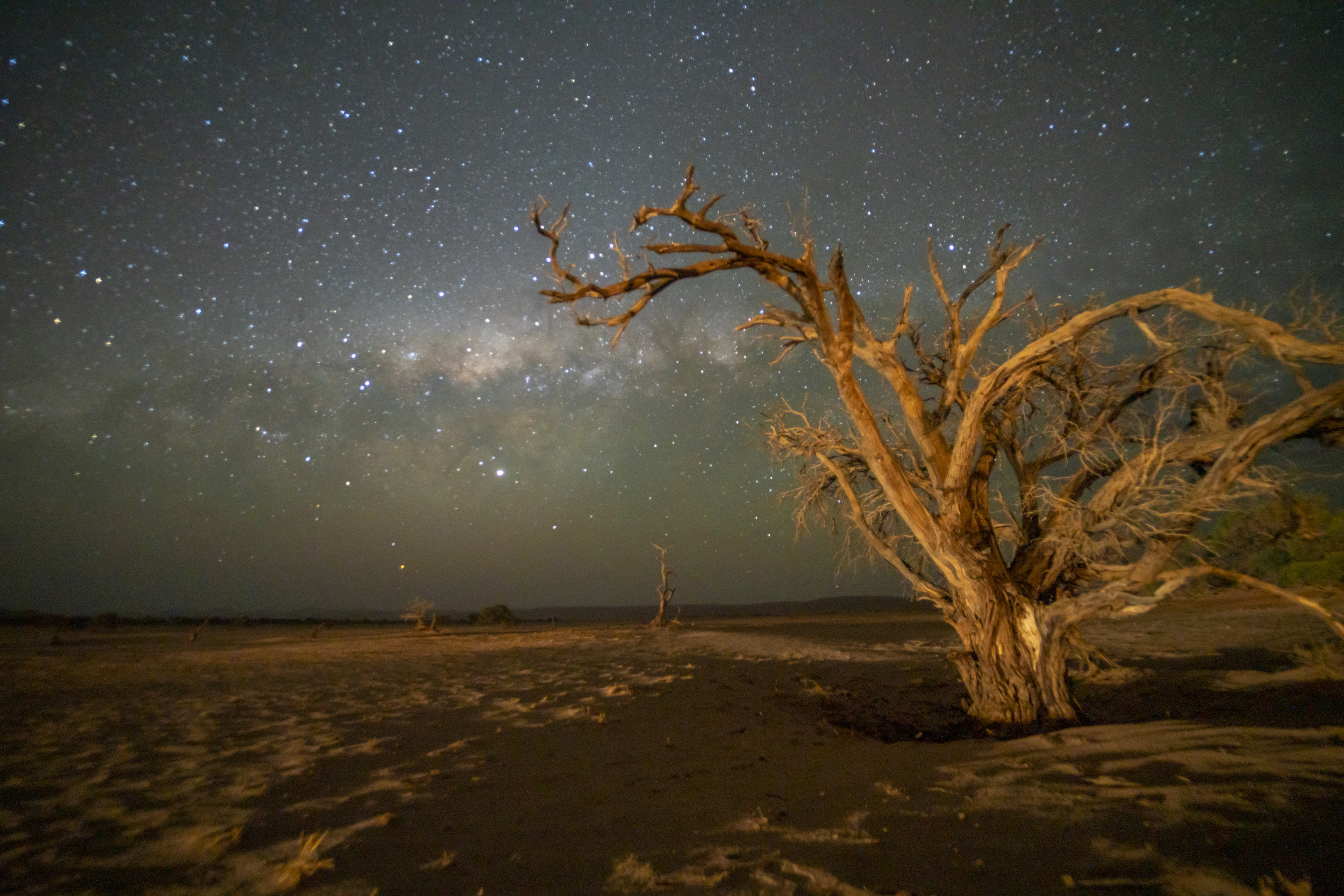 Large dead trees in the desert foreground a star-speckled sky.