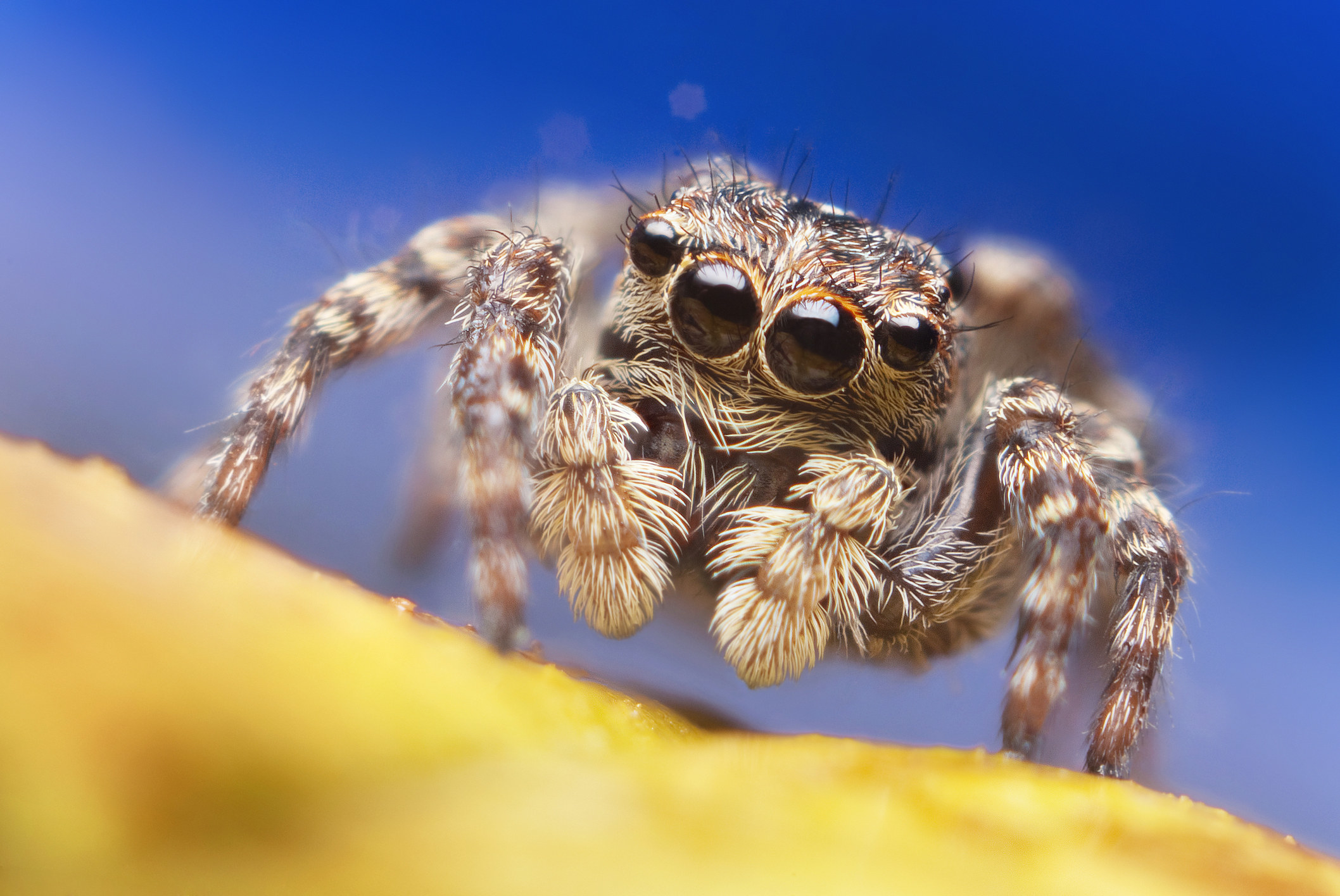 Jumping spider on bright background in nature