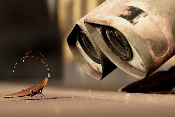 Hal the cockroach and Wall-E staring at each other.