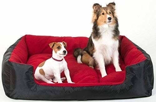 Two dogs on a red and black pet bed.