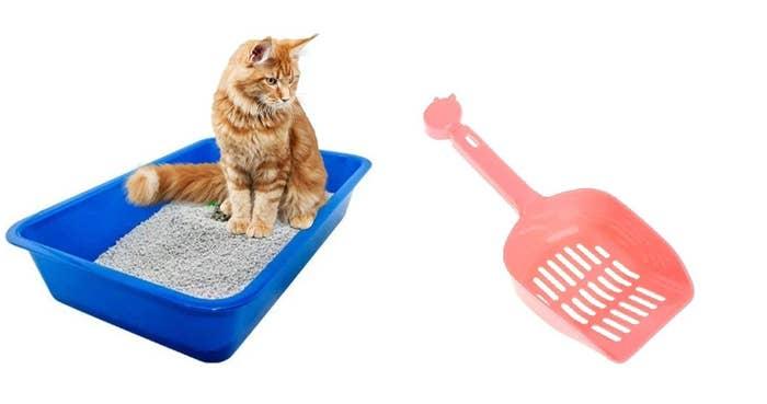A cat sitting in a litter box with a scooper.