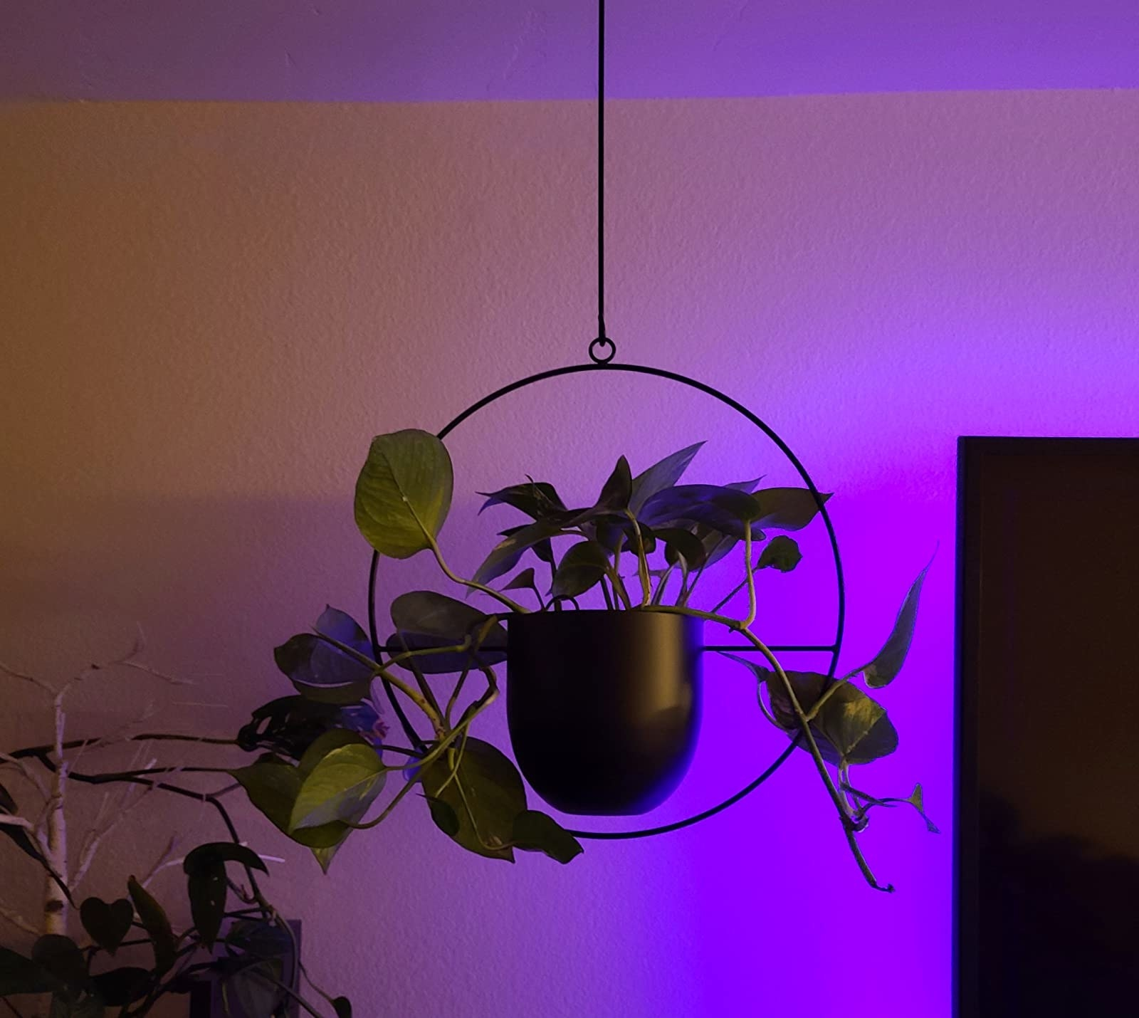 The black planter hanging in the room. The product has a stiff circular frame and a solid hanging wire; the pot is right in the middle of the circle frame and held in place by a single horizontal wire.