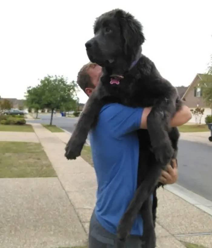 A man holding a really big dog outside