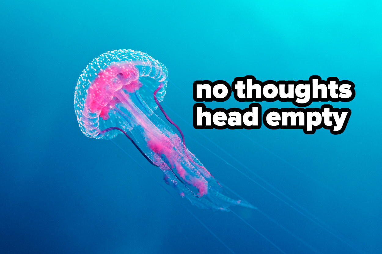 """jellyfish captioned """"no thoughts head empty"""""""